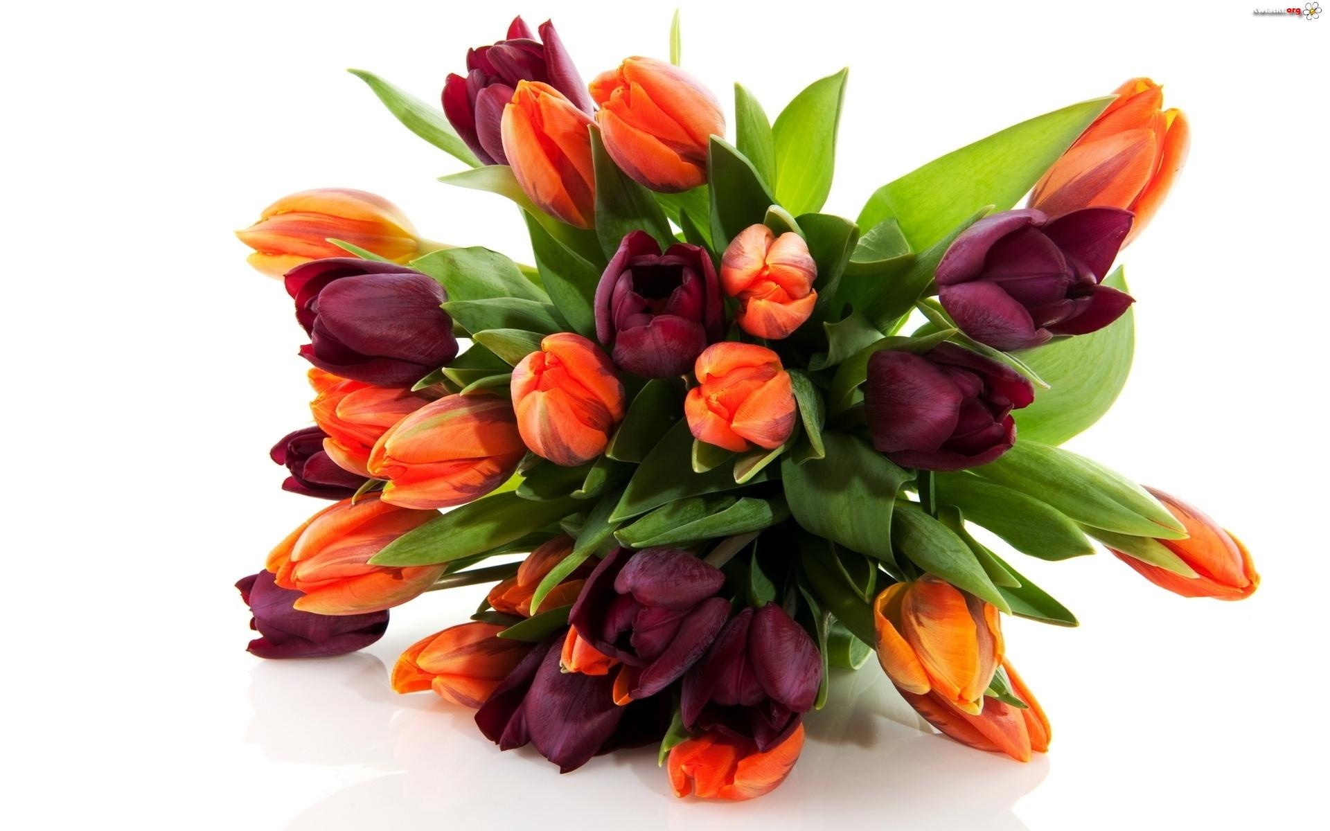 Bukiet tulipan w zdj cia for Nice bouquet of flowers