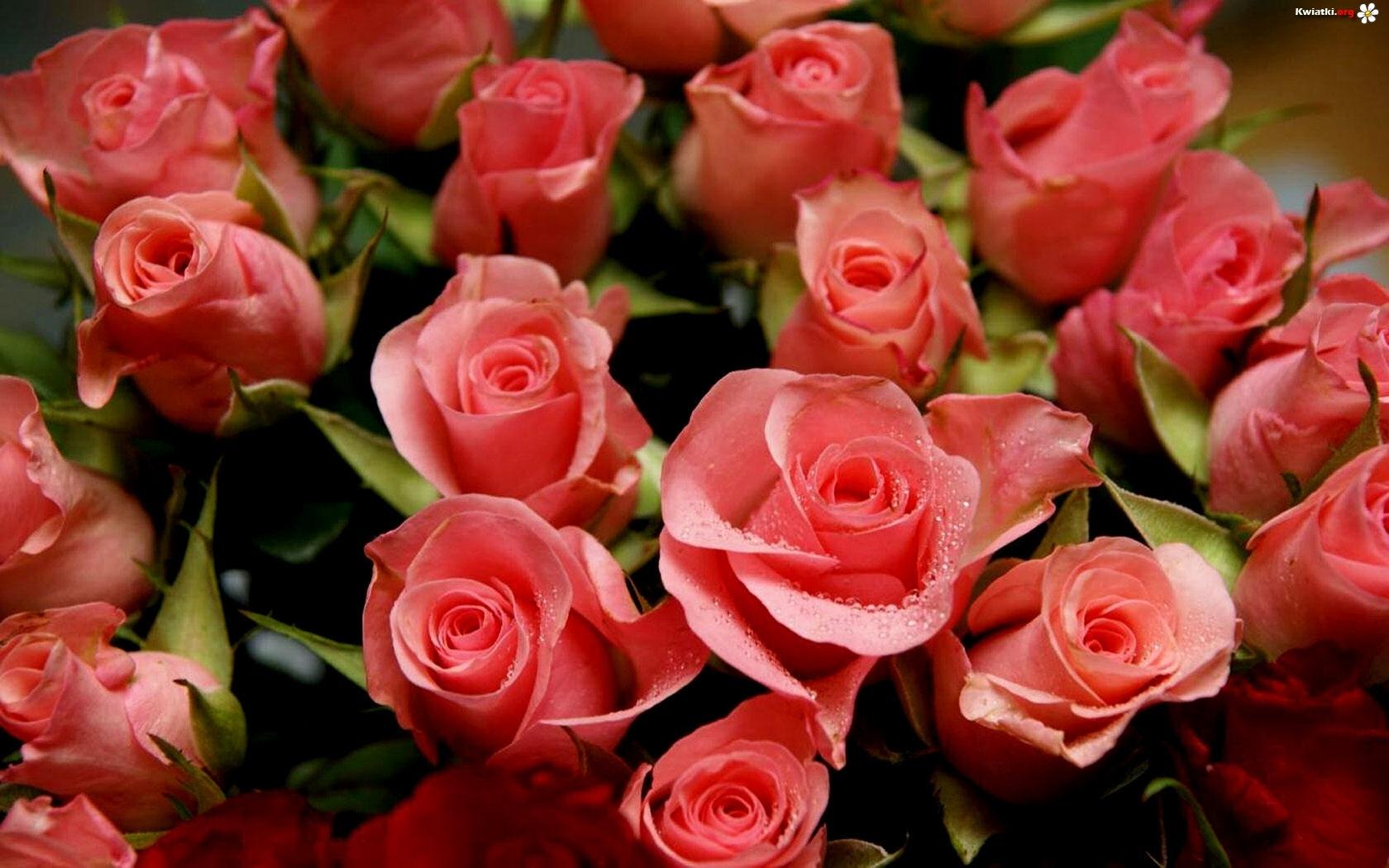 [Obrazek: kwiatow-bukiet-roze.jpeg]